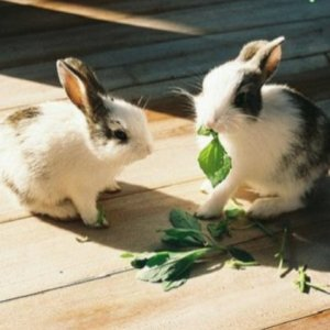 Какую траву можно давать кроликам и нельзя: правила и нормы кормления