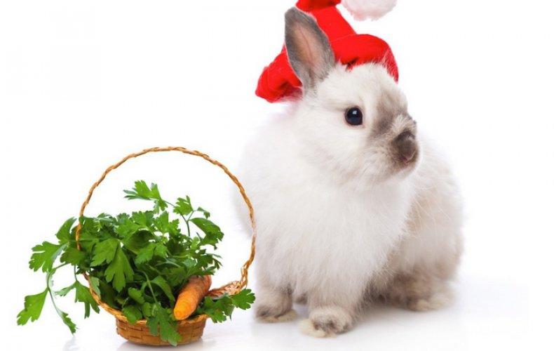 Петрушка для кролика