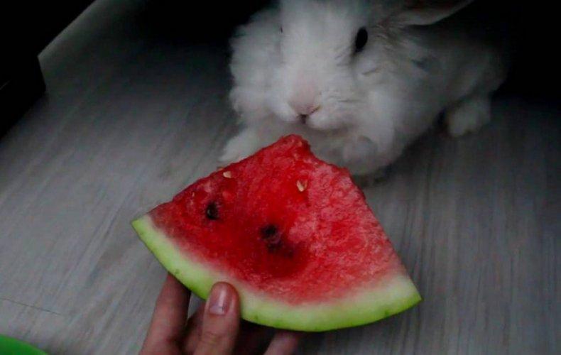 арбуз, кролик, бахчевыми культурами, зайца арбузом, кормить зайца, кормить кроликов