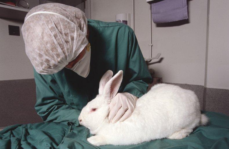Ветеринар осматривает кролика