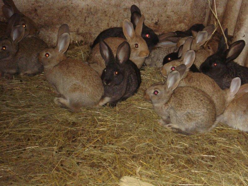 Кролики в возрасте 60–90 дней