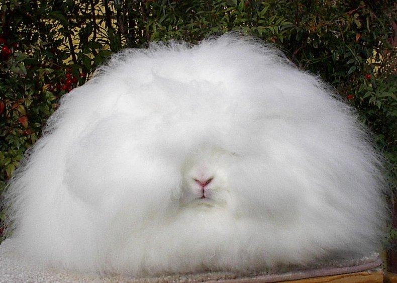Качественный мех у кролика