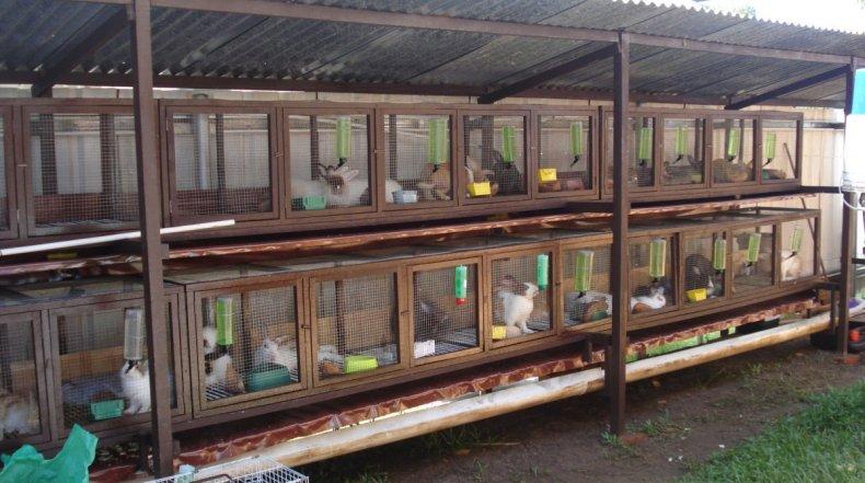Кролики в уличных клетках
