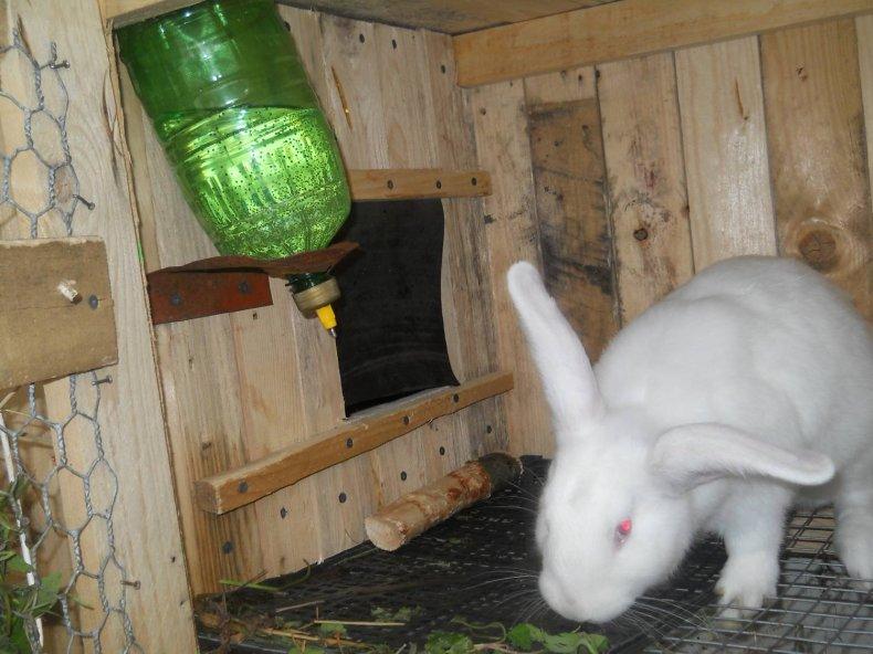 Чистая вода в поилках в кролятнике