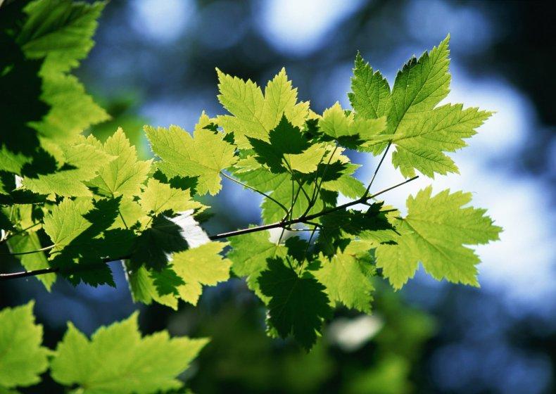 Листья и ветки деревьев