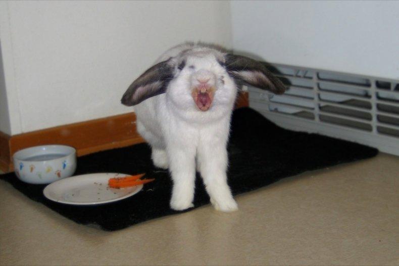 Кролик отказывается от еды