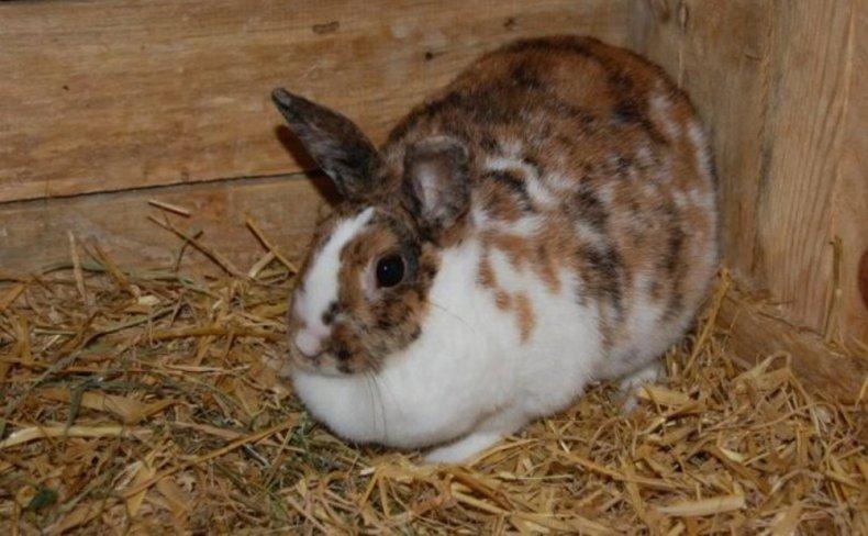 кролики не хотят спариваться