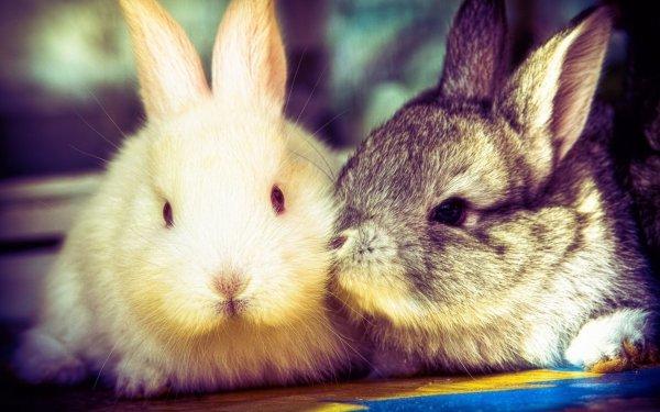 Крольчиха не хочет спариваться что делать