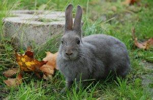 кролик, отказать, задний, лапа, причина, профилактический