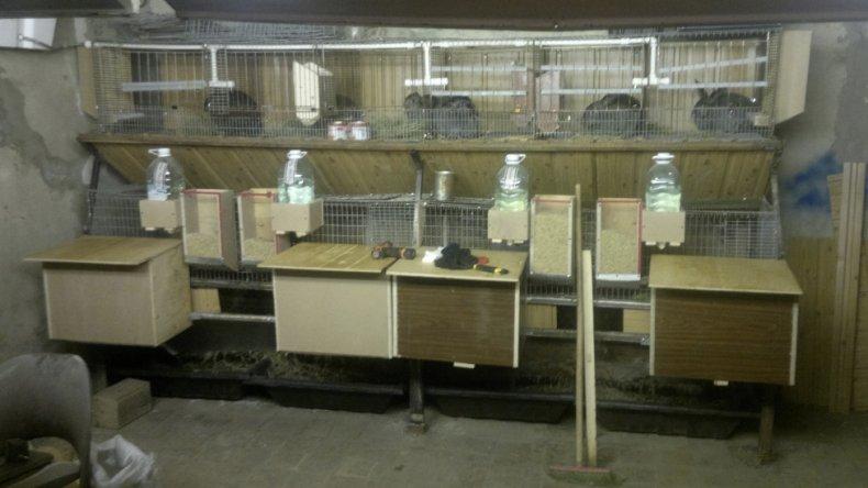Разведение кроликов в гараже