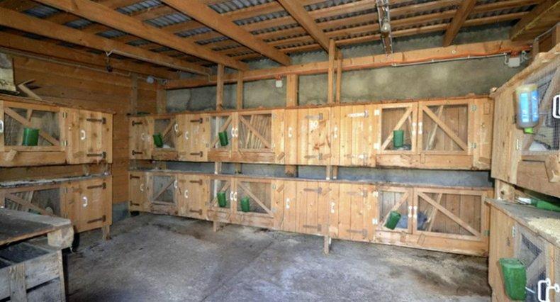Разведение кролей в гараже