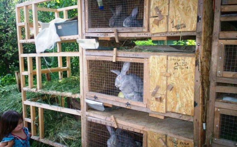 Уличная клетка для кроликов