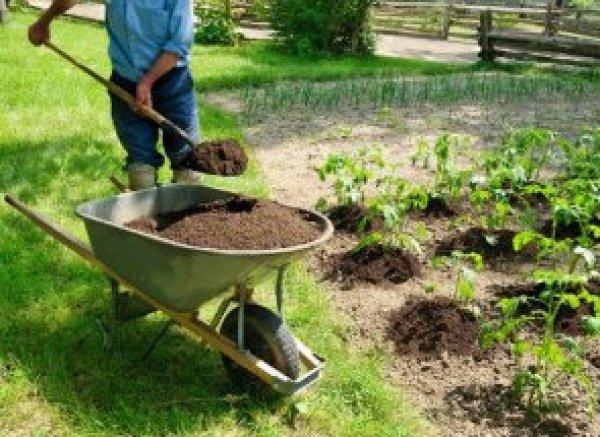 полезен ли конский навоз для огорода