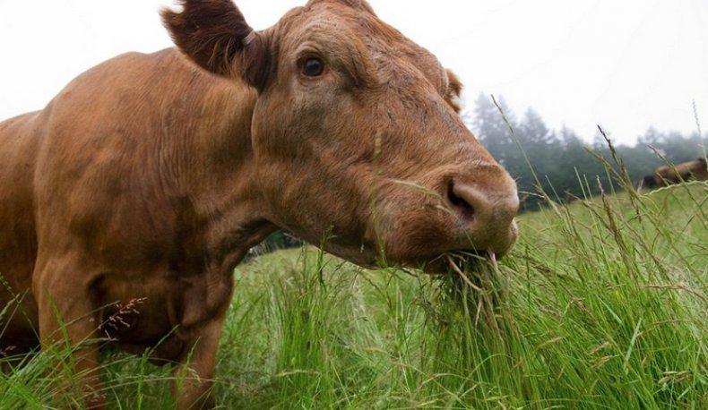 Фото лечебных трав на таймыре случайно