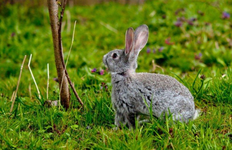 кролик, дыня, польза, вред, заготовить зиму