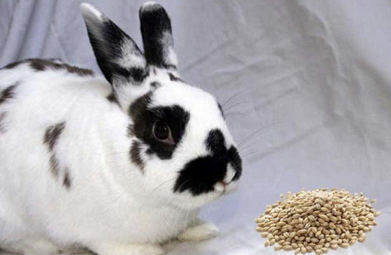 Перловка для кроликов