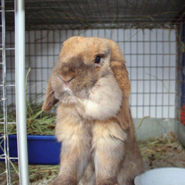 Почему кролик не ест и не пьет?