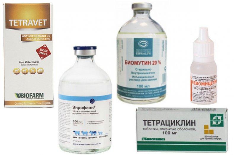 микоплазмоз, симптом, лечение, профилактика, крупного скота, больное животное
