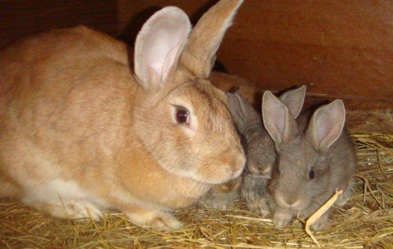 Почему кролики умирают
