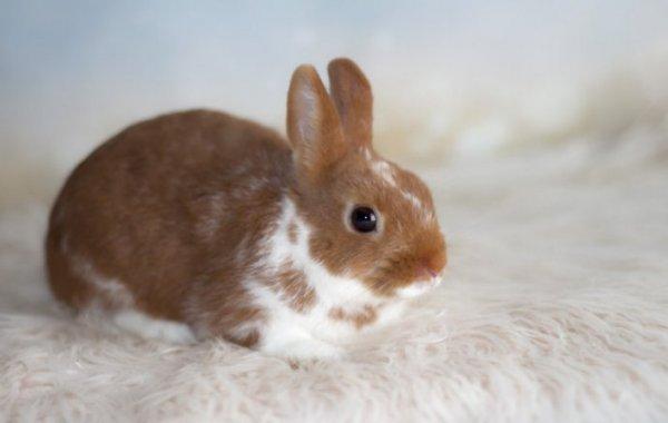 Кролик хрюкает: причины, что делать