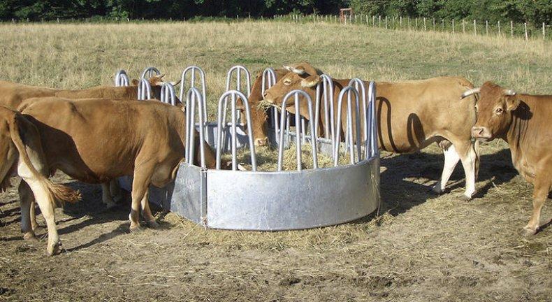 Кормушка для коров