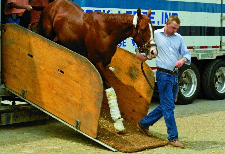 Перевозка лошадей