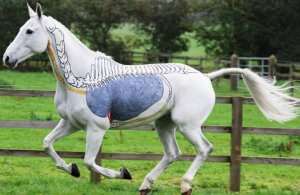 Анатомическое строение лошади внутреннее и внешнее