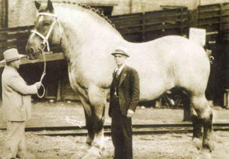 Конь Самсон
