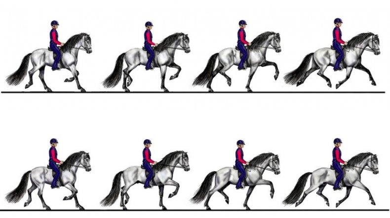 Аллюры виды лошадиного бега