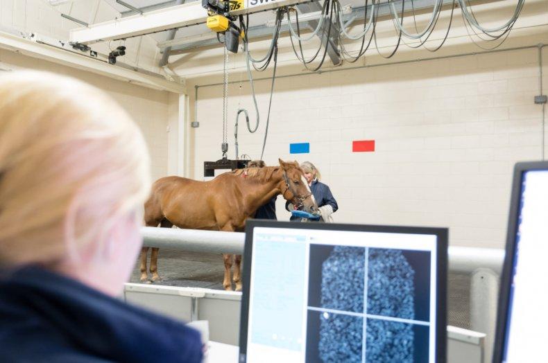 Диагностика лошади