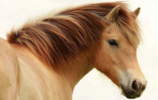 Стрижка лошадей как подстричь лошадь самостоятельно