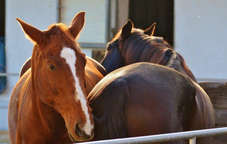 Болезни лошадей (инфекционные, незаразные) симптомы и лечение