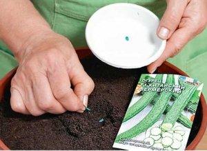 урожай, огурец, подоконник, большие горшки, выращивания кустов