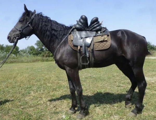 Кабардинская порода лошадей характеристика содержание и уход