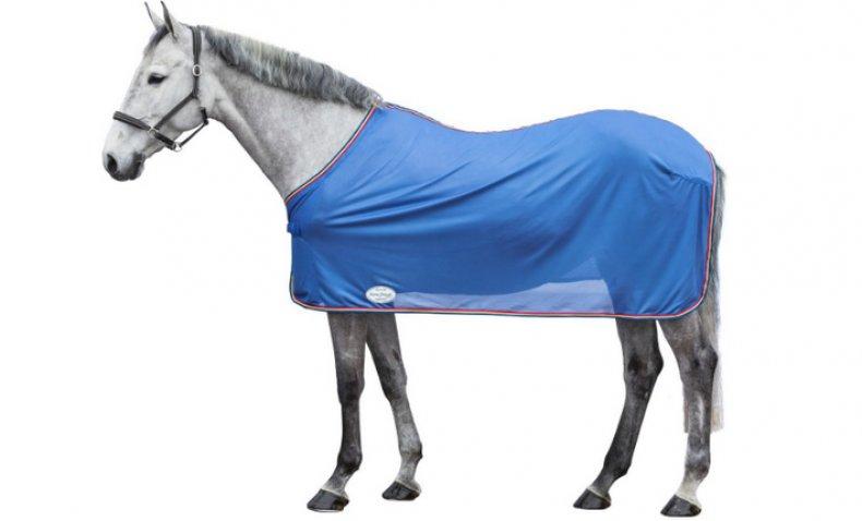 наряды для лошадей в картинках да, заметила сразу