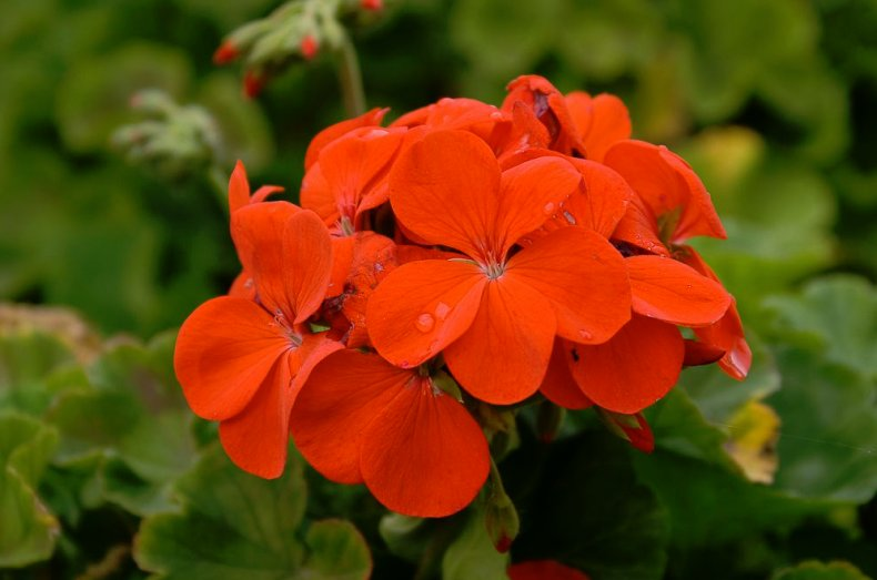 Ботаническое описание растения