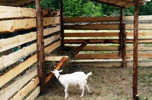 Кормушка для козы