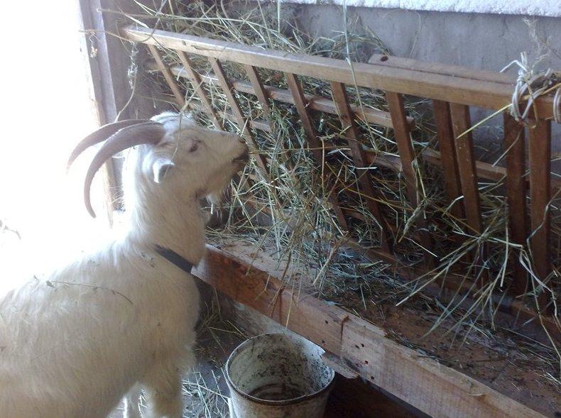 Кормушка под сено для козы