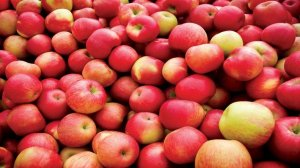 В Санкт-Петербурге было уничтожено почти 2 тонны яблок из Украины
