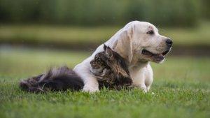 В России уже действует закон о защите животных
