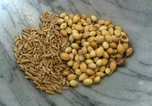 тмин, кориандр, тмина кориандра, альтернативной медицине, 2-ух растений, белка жиров