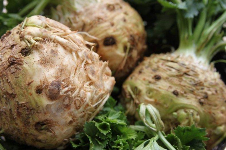сельдерей, хранение, сбора урожая, пищевой плёнкой, подобном случае, прикорневой розетки