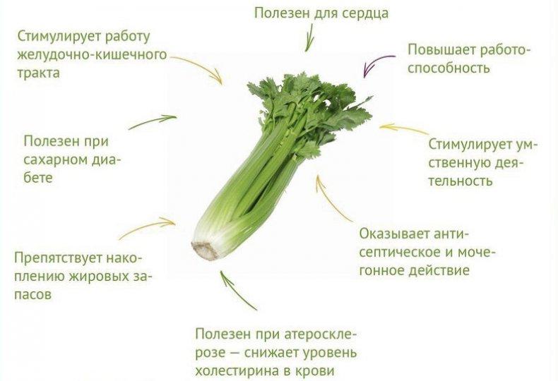 сельдерей, листовой, противопоказание, здоровье, употребление, витаминов минералов