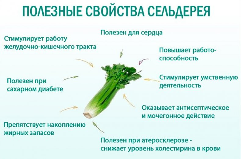 Полезные свойства сельдерея