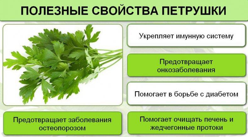 Полезные Свойства Петрушки При Похудении.