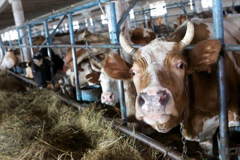 министерство, аграрный, политик, украины, животноводство, приоритет