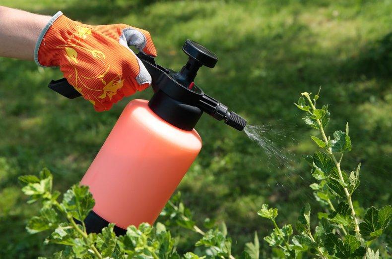 Обработка растений от вредителей