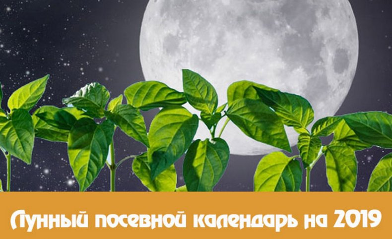 Лунный посевной календарь на 2019 год