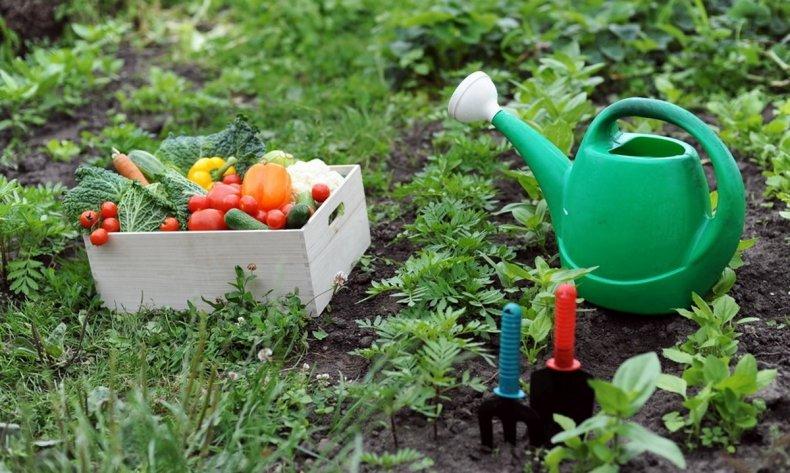 Подкормка огорода