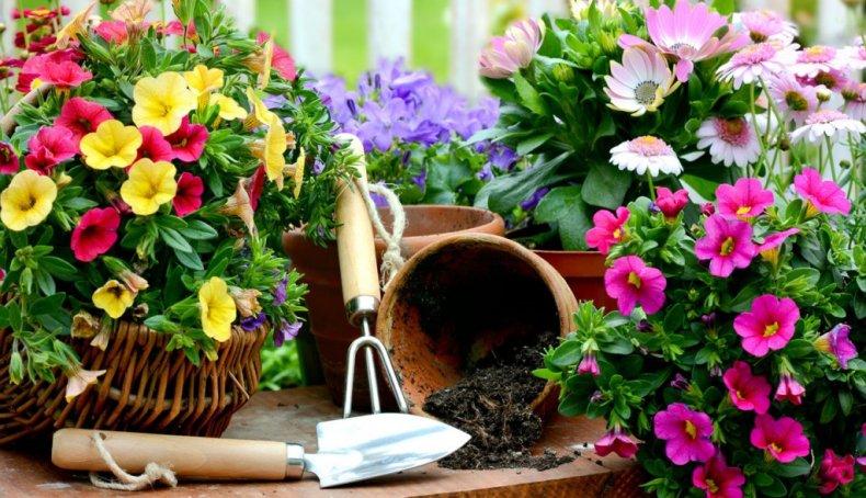 Садовые и комнатные цветы